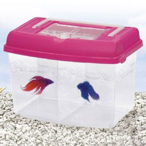 Twin Bowl Betta Tank With Carry Lid