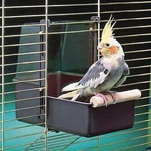 Outside Bird Bath (large) For Cockatiels