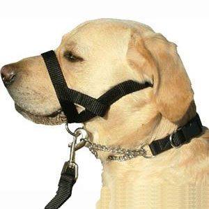 Kumfi Dog Head Halter Medium