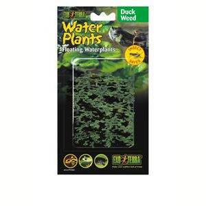 Exo Terra Floating Plant - Duckweed