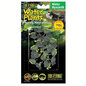 Exo Terra Floating Plant - Water Hyacinth