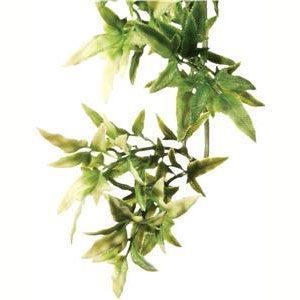 Forest Plant - Croton - Medium