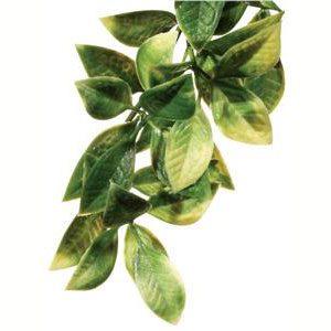 Forest Plant - Mandarin - Medium