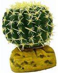 Barrel Cactus - Small ( 7cm Dia)