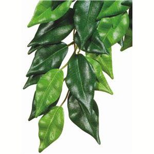 Forest Plant - Ficus - Medium
