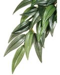 Forest Plant - Rucus - Medium