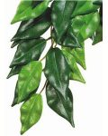 Forest Plant - Ficus - Large