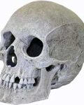 Ornament - Large Human Skull