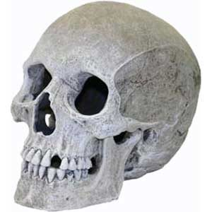 Ornament - Large Human Skull