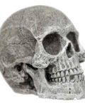 Ornament - Human-Skull (Mini)