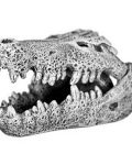 Ornament - Nile Crocodile Skull (Mini)