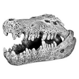 Ornament - Nile Crocodile Skull (Mini)