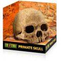 Exo Terra Primate Skull - Large